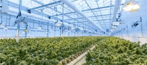 Cannabis Industry Statistics 2020